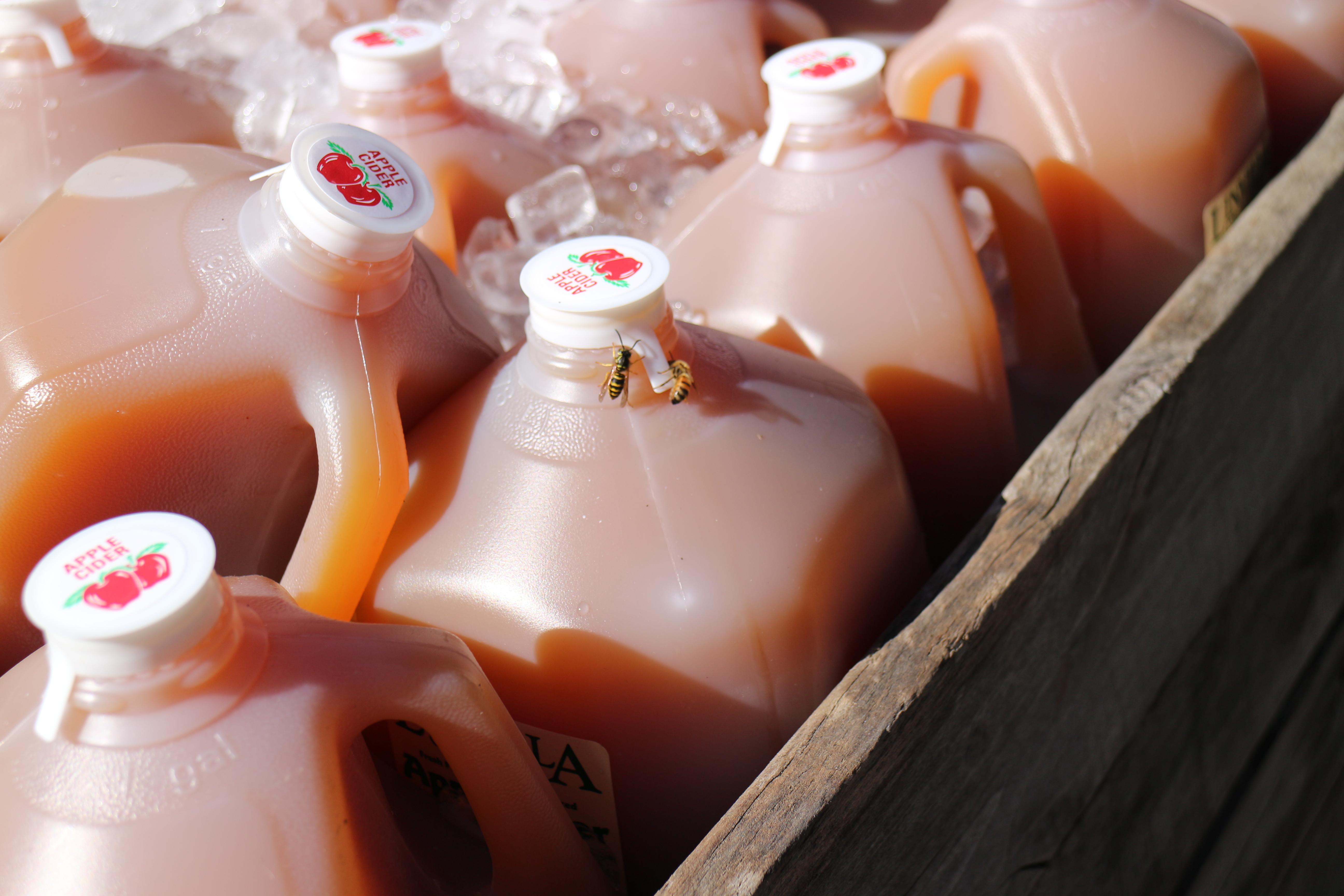 Linvilla Orchards - Fresh apple cider