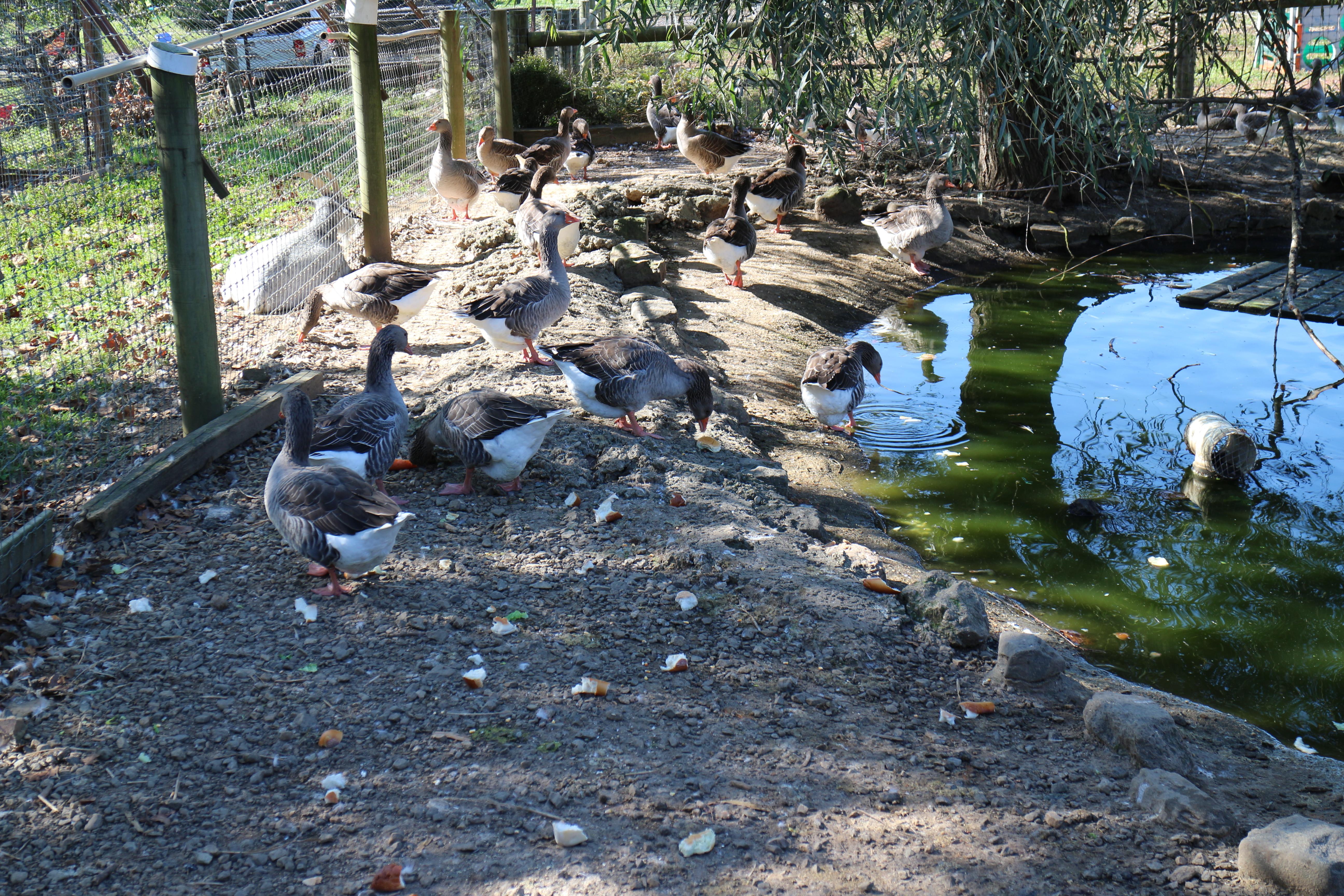 Linvilla Orchards - animals