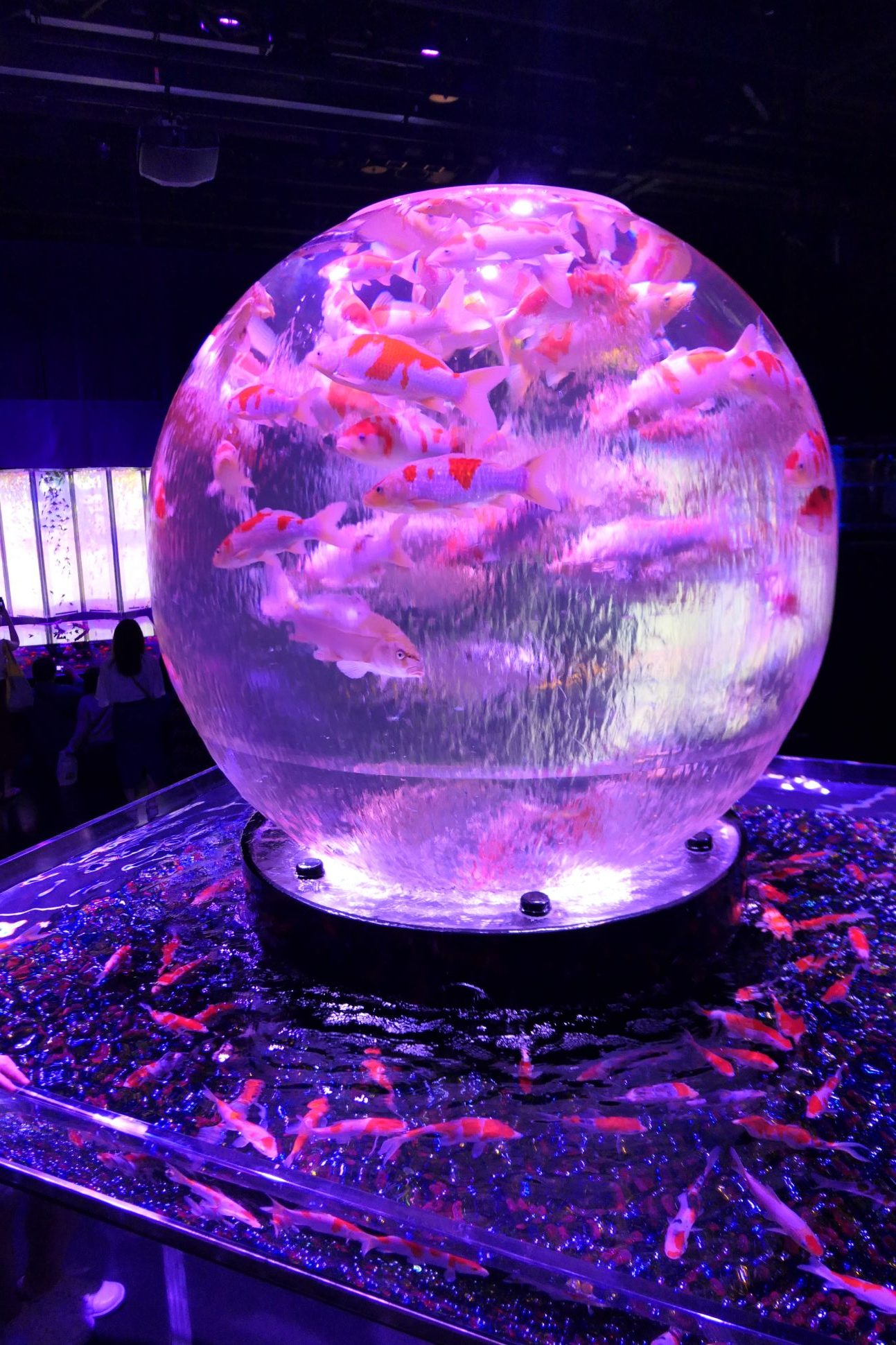 Summer in Japan - Art Aquarium