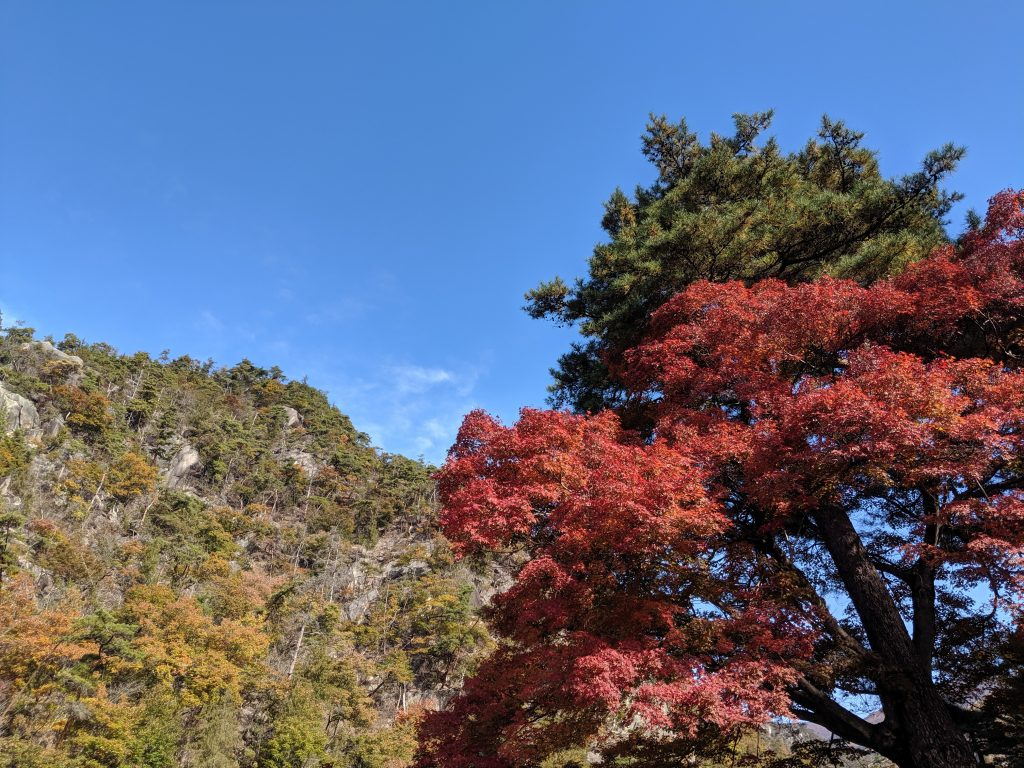 Trees turning color in Shosenkyo Gorge.